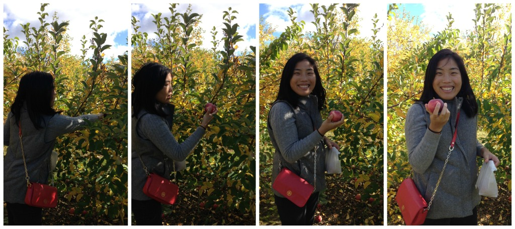 ApplePickingCollage