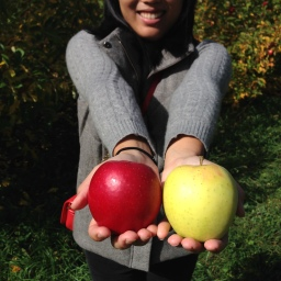 Fall Festivities: Apple Picking at Shelburne Farm