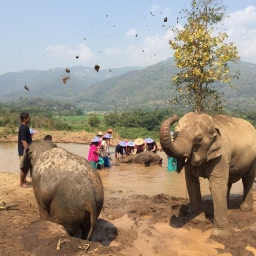 Little Film: Happy Elephant Home in Chiang Mai