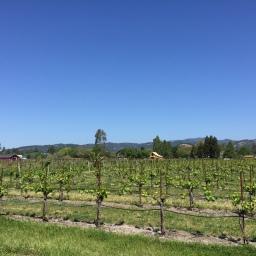 Biking (a little bit of) Sonoma