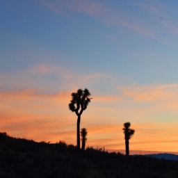 To the Desert: Joshua Tree National Park