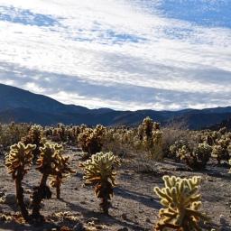 Little Film: Palm Springs & Joshua Tree