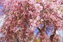 Celebrating Spring in the Filoli Gardens